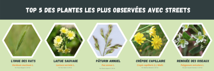top 5 plantes streets