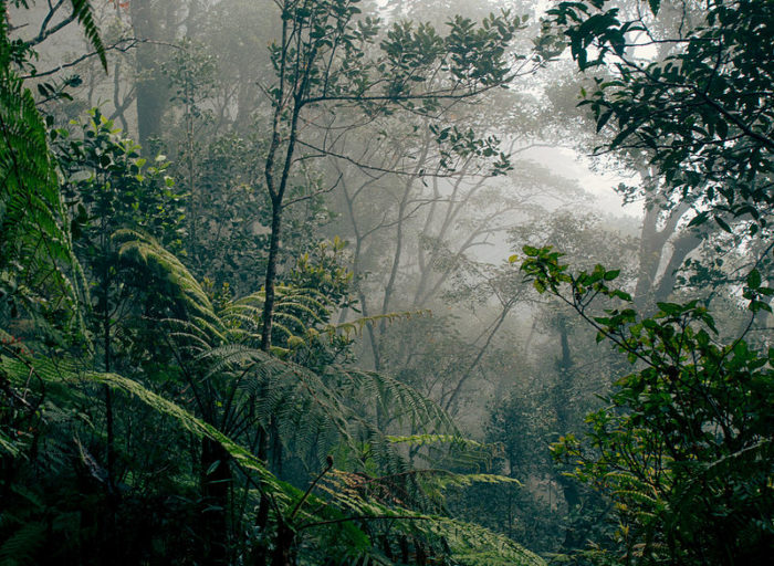 Borneo_rainforest