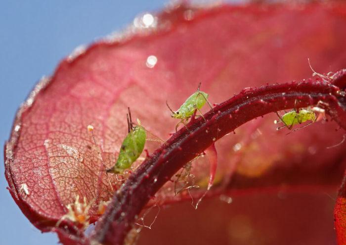 productions-vegetales-bioagresseur-protections