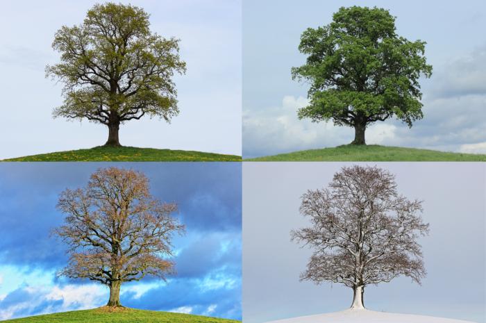 tree-776932_1920