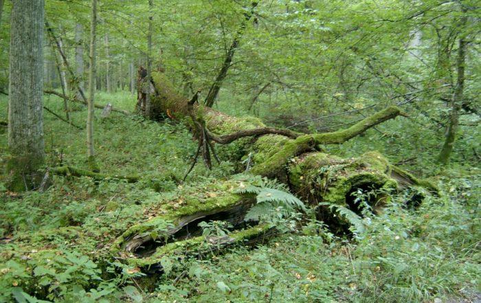 2005-09_Białowieski_Park_Narodowy_2-e1618930138788