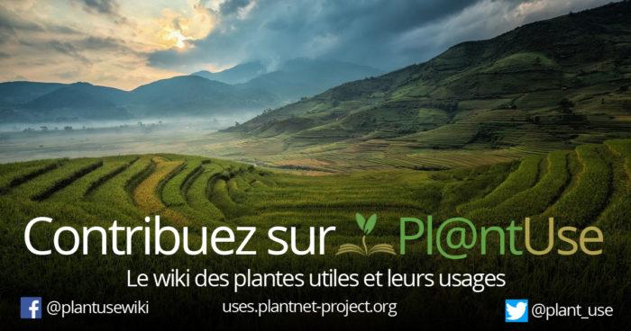 Visuels-Plantuse