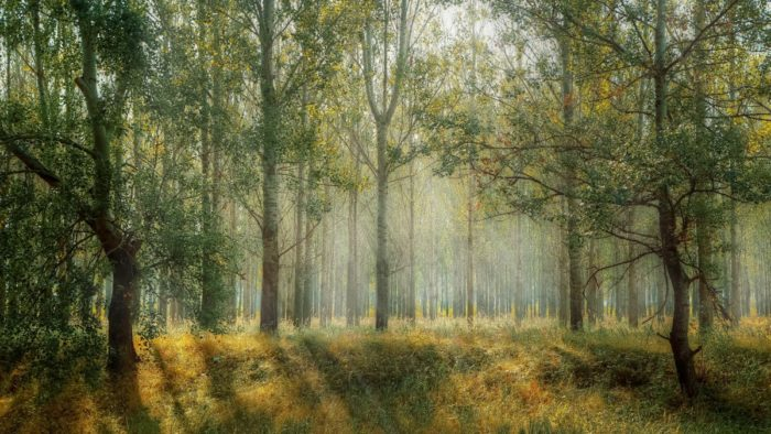 green_park_season_nature_outdoor_green_background_landscape_natural-839604