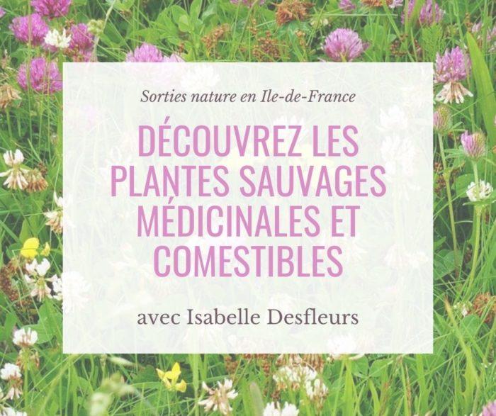 Sorties nature Plantes sauvages comestibles en Île-de-France