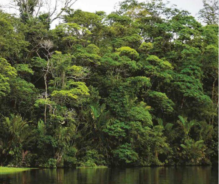 Les forêts tropicales sont apparues il y a près de 390 millions d'années.