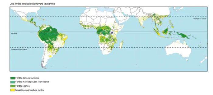 Répartition des forêts tropicales dans le monde.