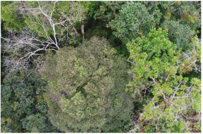 Le chablis est une ouverture de la voûte forestière créée par la chute d'un arbre, offrant une opportunité pour les espèces dites de lumière de cicatriser cette « blessure ».