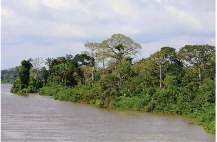 Une forêt semi-décidue, le long du fleuve Sassandra (Côte d'Ivoire), montre des arbres défeuillés et d'autres conservant leurs feuilles malgré la saison sèche.
