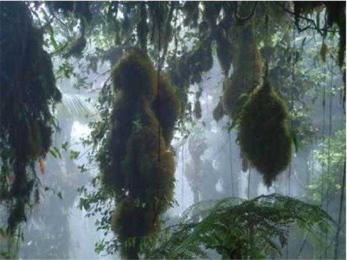Les arbres des montagnes sont couverts de lichens et d'autres épiphytes en raison de la forte humidité régnante.