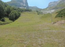 Piste de ski revégétalisée à partir de semences locales