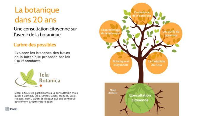 L'arbre des possibles - Consultation citoyenne