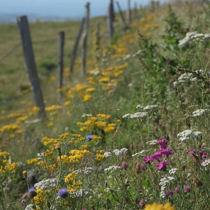 bord de chemin fleuri