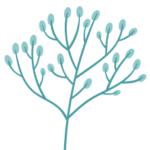 Logo du projet Référentiel des trachéophytes de métropole