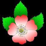 Logo du projet ABBA – Association Botanique du Bassin de l'Adour (SBF)