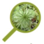 Logo du projet Observatoire Plantes Envahissantes