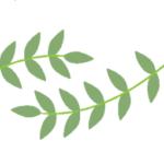 Logo du projet Société Botanique du Vaucluse (SBV)