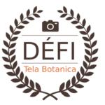 Logo du projet Défi Photo