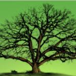 Logo du projet Inventaires des arbres remarquables