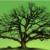 Inventaires des arbres remarquables