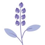 Logo du projet Recensement des herbiers de France