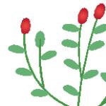 Logo du projet Flore d'Afrique du Nord