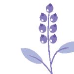 Logo du projet Réseau de conservation de la flore Alpes-Ain